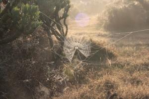 mojon-cobwebs-1