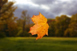 falling-autumn-leaf